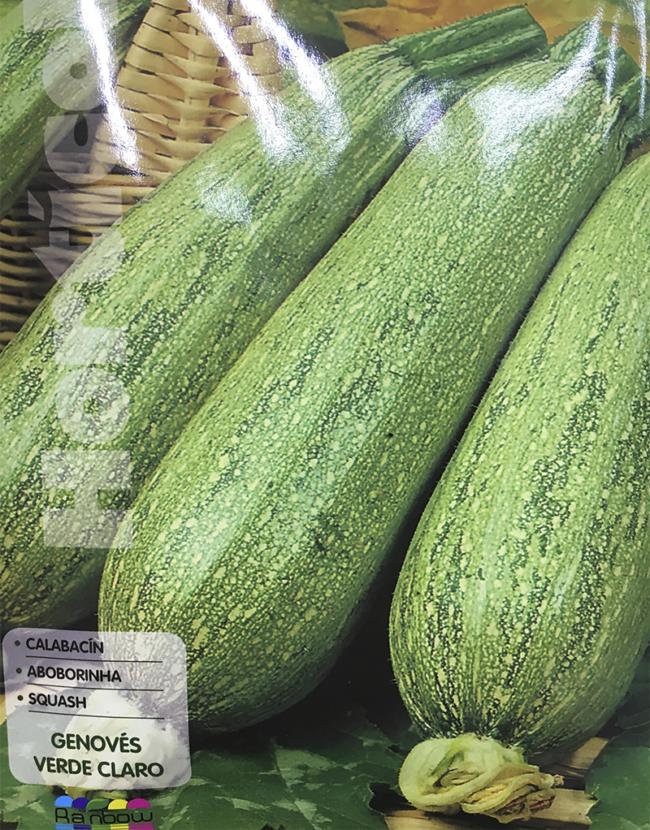 calabacin genoves verde claro