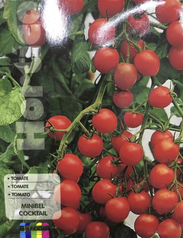 tomate minibel cocktail